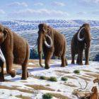 Klónozott mamutok Szibériában?